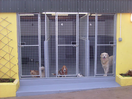 Boarding Kennels Northern Ireland