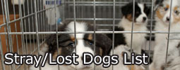 Lost Dogs List