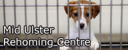 View the Mid Ulster Rehoming Centre